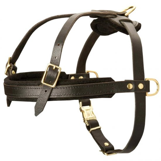 Leather English Bulldog Harness for Tracking and Pulling