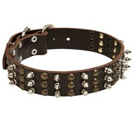 English Bulldog Spikes and Studs Rows Leather Dog Collar