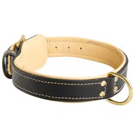 Padded Leather English Bulldog Collar