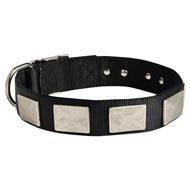 Nylon English Bulldog Collar Massive Nickel Plates