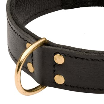 Brass D-ring Stitched to Leather English Bulldog Collar