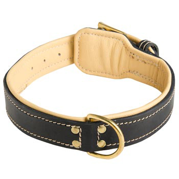 Leather Dog Collar Padded for English Bulldog Off Leash Training