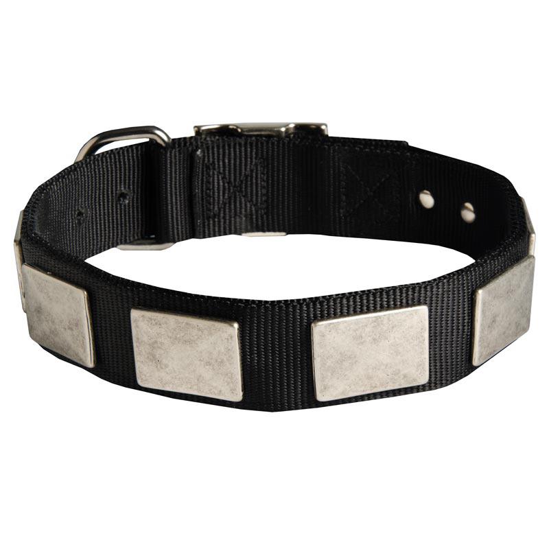 Nylon English Bulldog Collar Massive Nickel Plates [C274#1131 Nylon ...