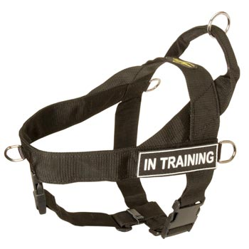 English Bulldog Nylon Harness with ID Patches