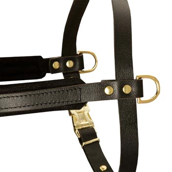 Training Pulling English Bulldog Harness with Sewn-In Side D-Rings