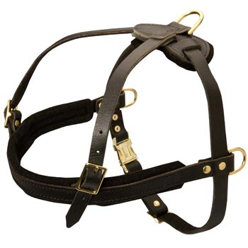 Leather English Bulldog Harness for Dog Off Leash Training